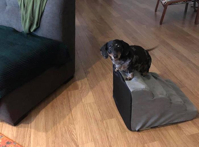 funny dog snapchats owner forgot to return steps