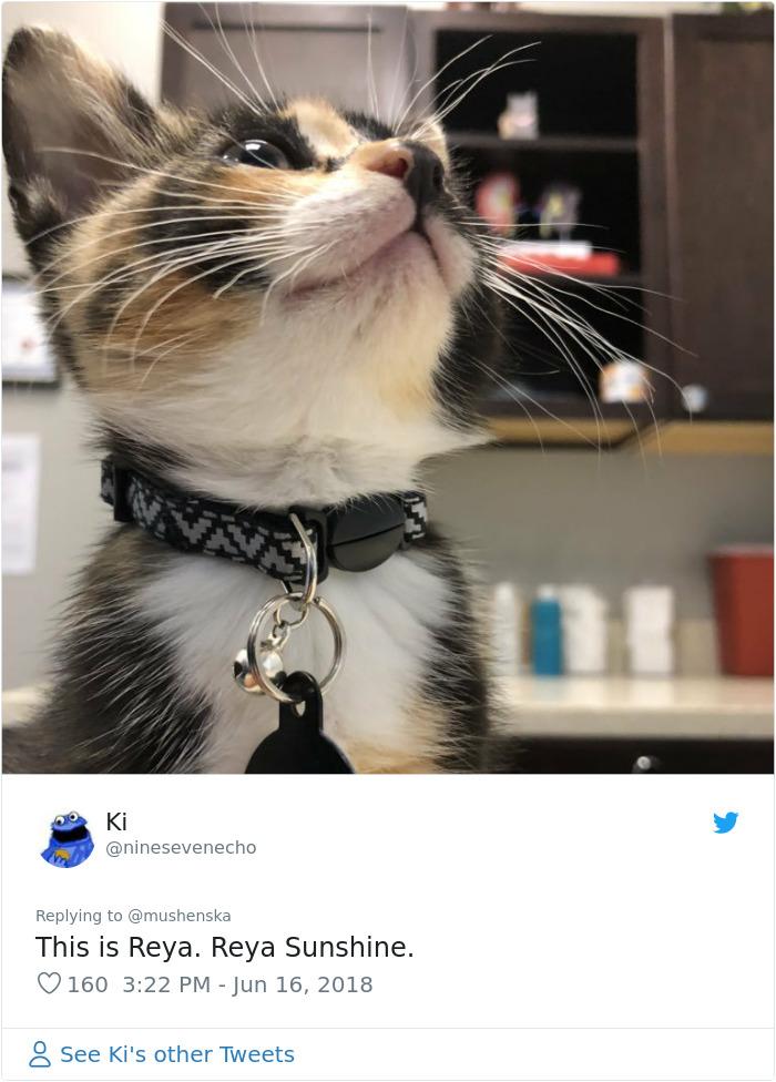 funny pet names reya sunshine