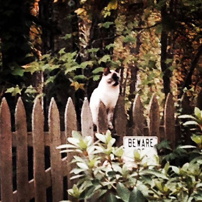 guard cat on fence