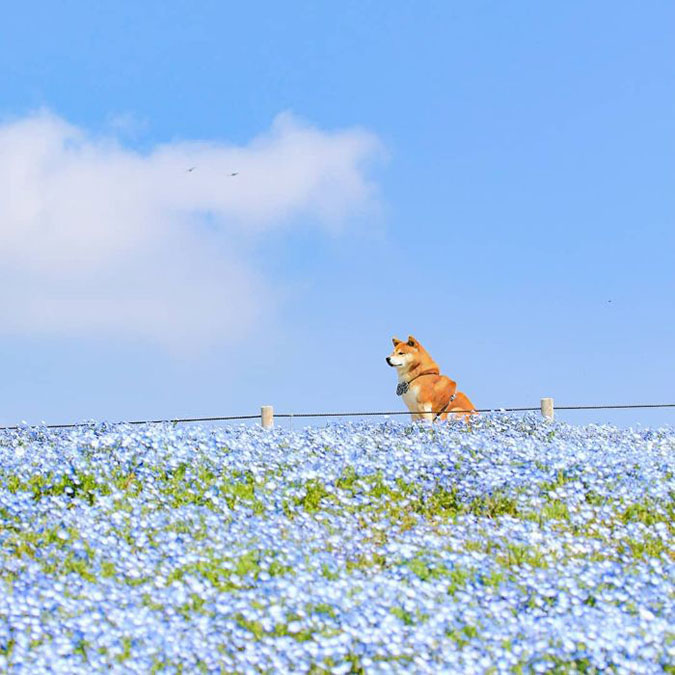 hachi observes something from faraway