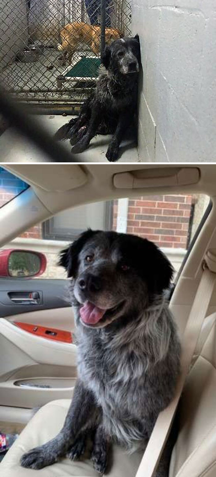 happy rescued dog