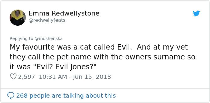 hilarious name cat evil