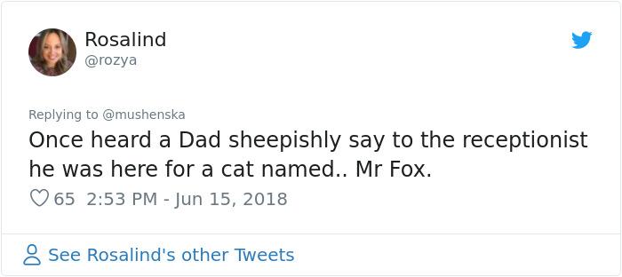 hilarious name cat mr fox