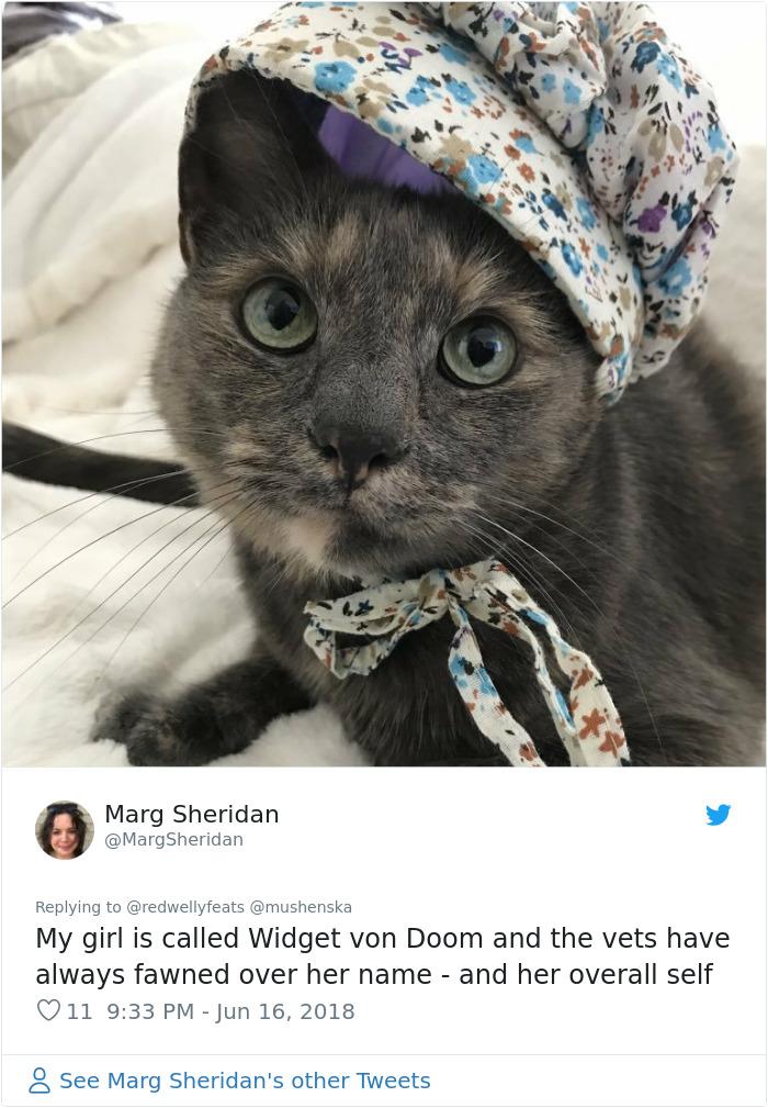 hilarious name cat widget von doom