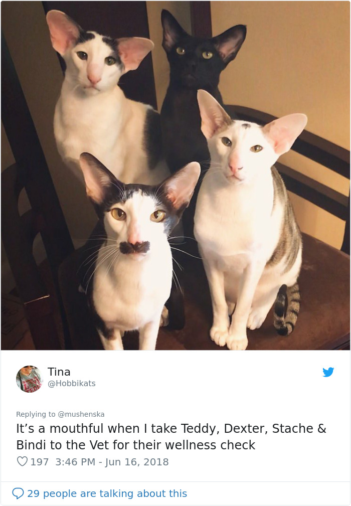 hilarious name cats teddy dexter stache and bindi