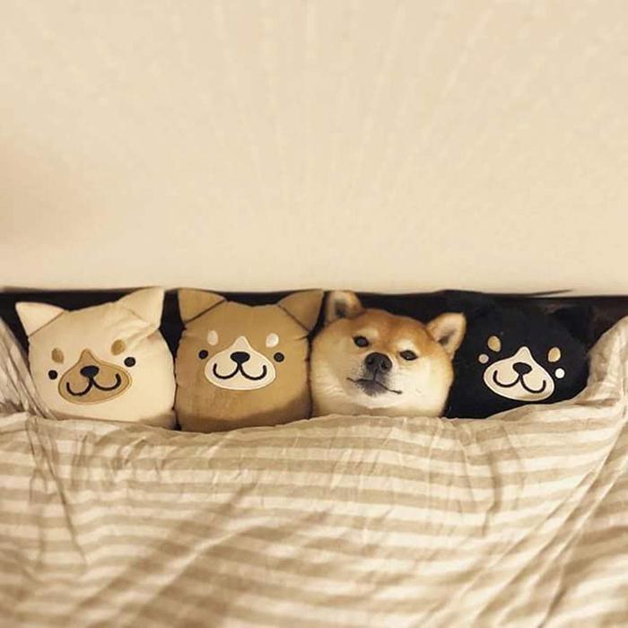hilarious pet photos cuddly pillow