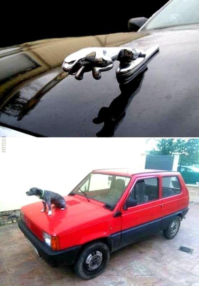 hilarious pet photos logo recreation