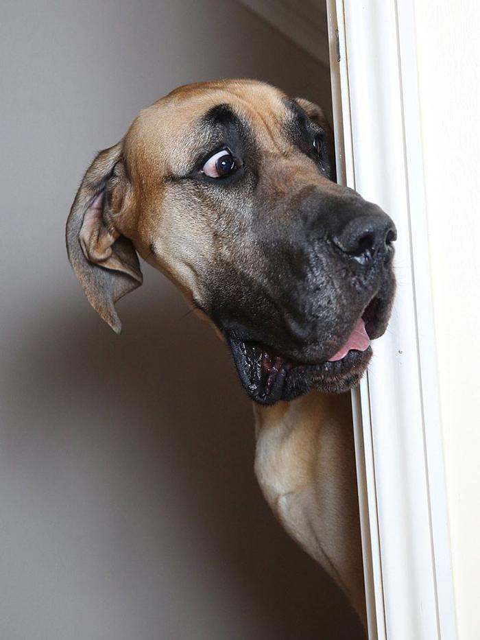hilarious pet photos real life scooby doo