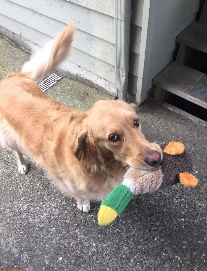 jasper wants to play