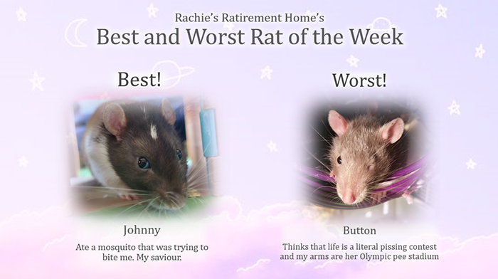 johnny and button as the best and worst rats of the week