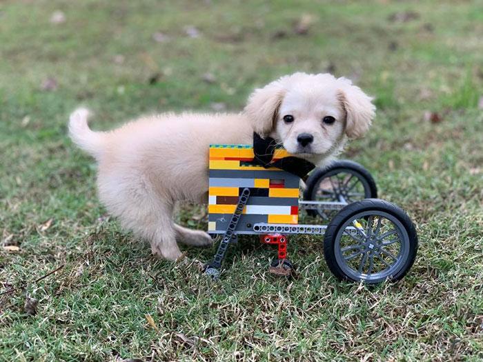 lego wheelchair helps disabled puppy walk