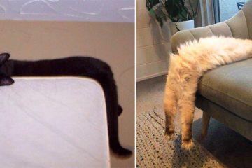 long cats