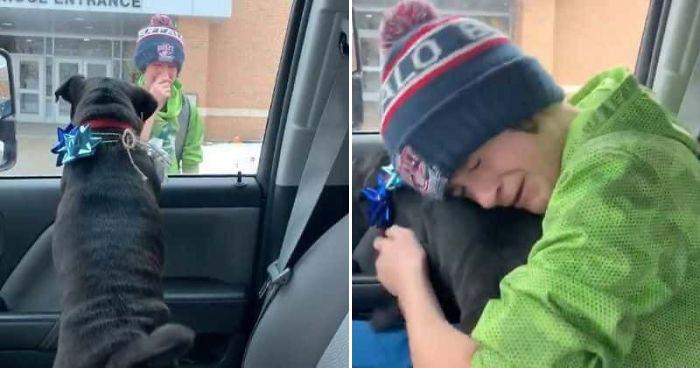 lost dog reunites with boy