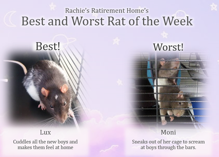 lux and moni as the best and worst rat of the week in sept 2018