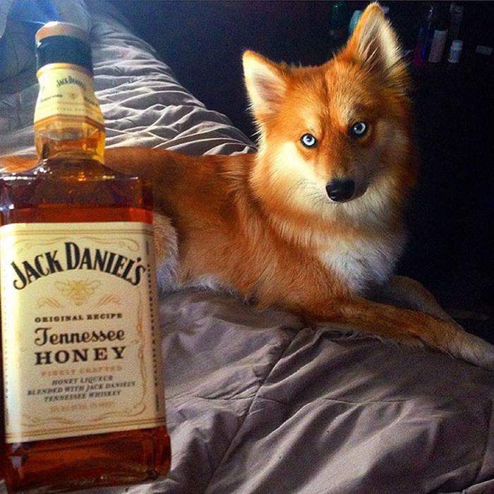 mya fox-like dog