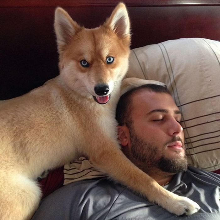 mya the pomsky with her owner