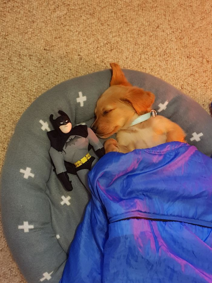 puppy put to bed