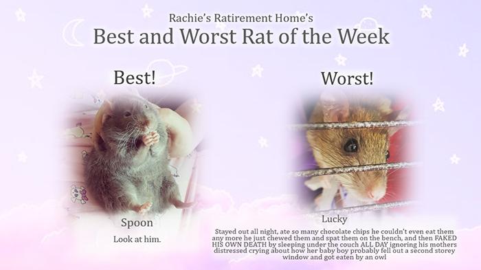 spoon is the best rat of the week