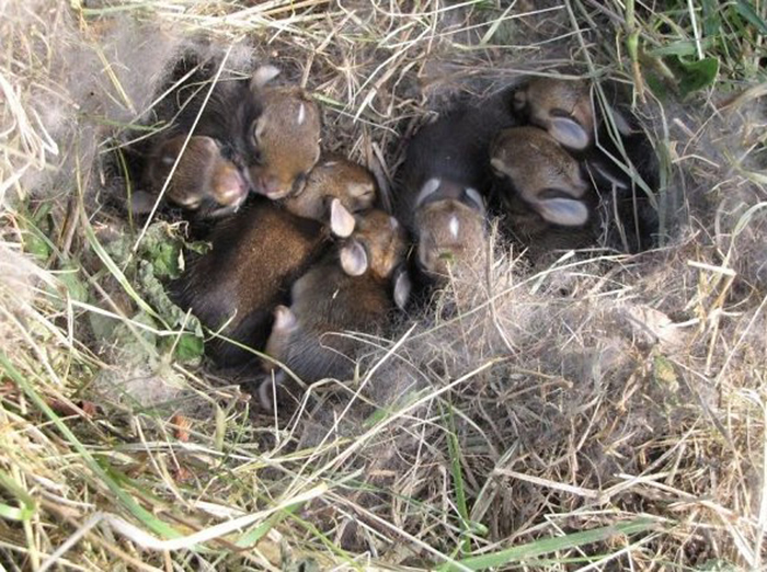 strange things discovery baby bunnies