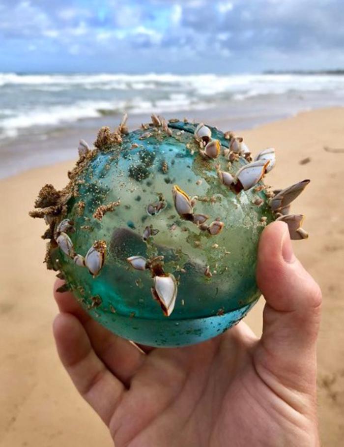 strange things discovery glass ball marine ecosystem