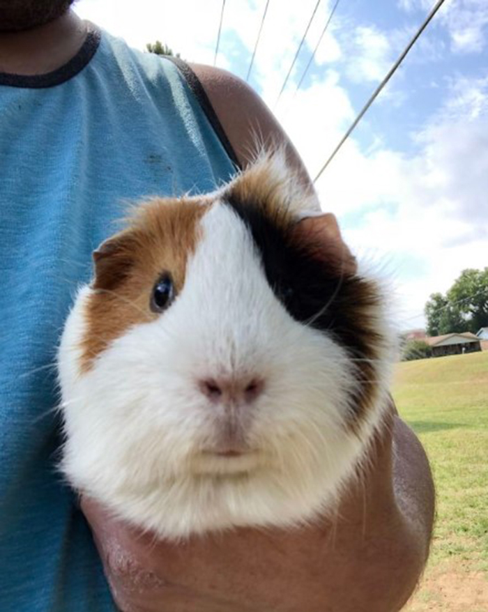 strange things discovery lucky guinea pig