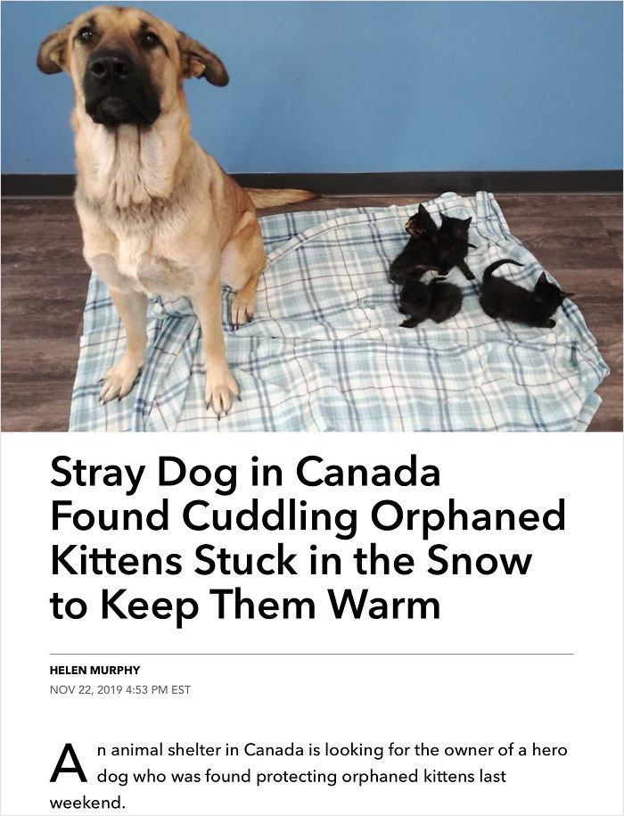 stray dog protects kittens from cold