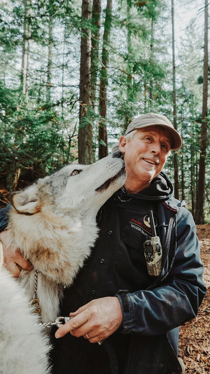 wolf kisses visitor in wolves sanctuary