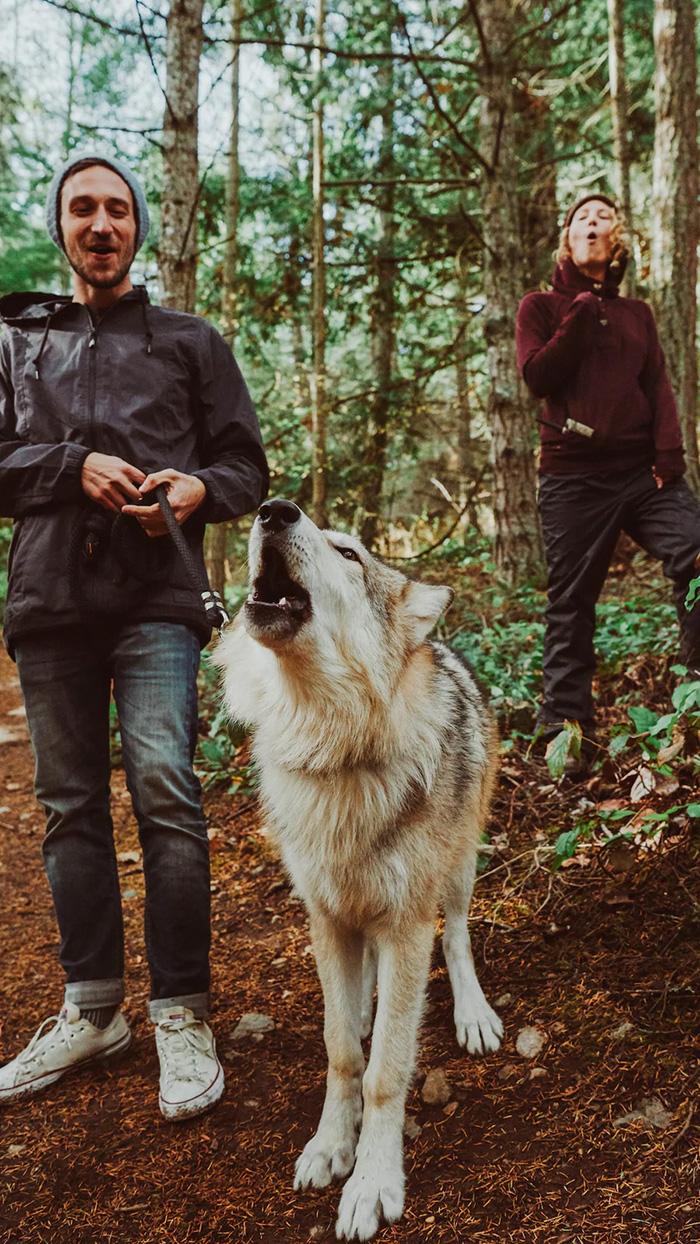 wolves sanctuary visitors