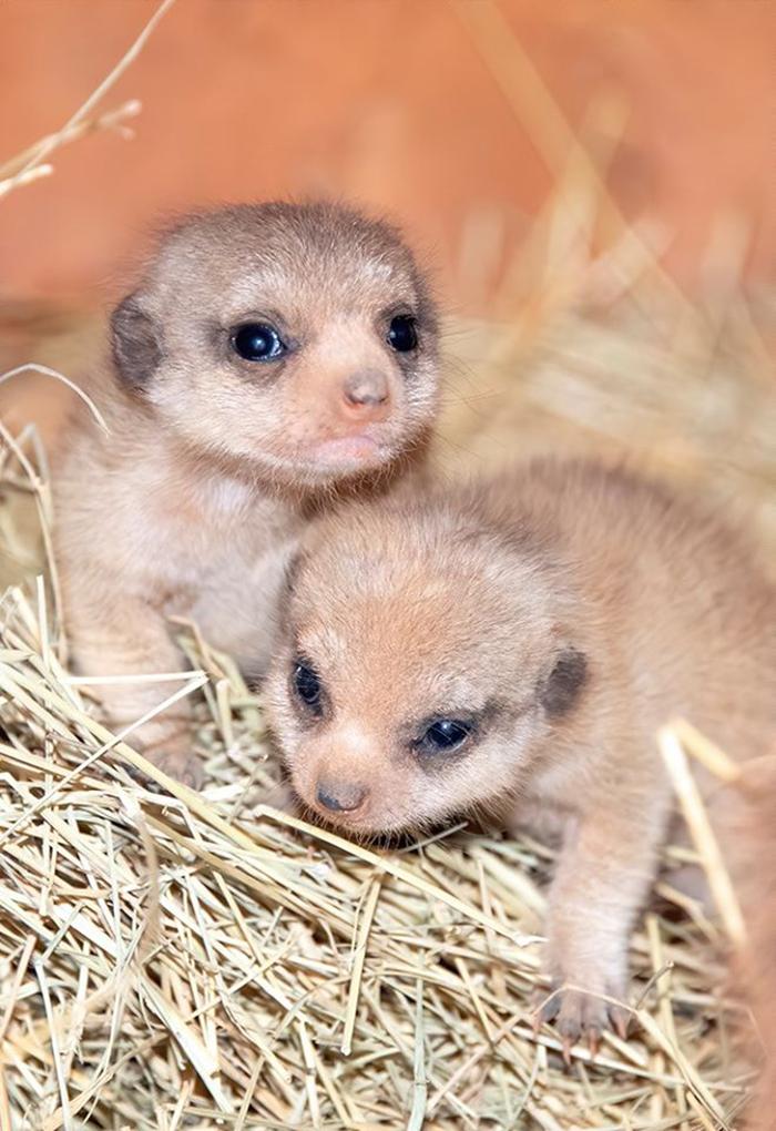 zoo miami cute newborn pups