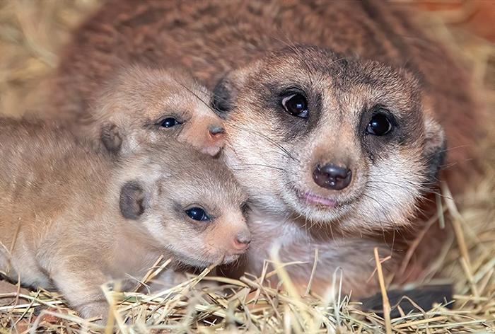 zoo miami yam yam gives birth