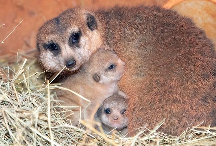 zoo miami yam yam with her babies