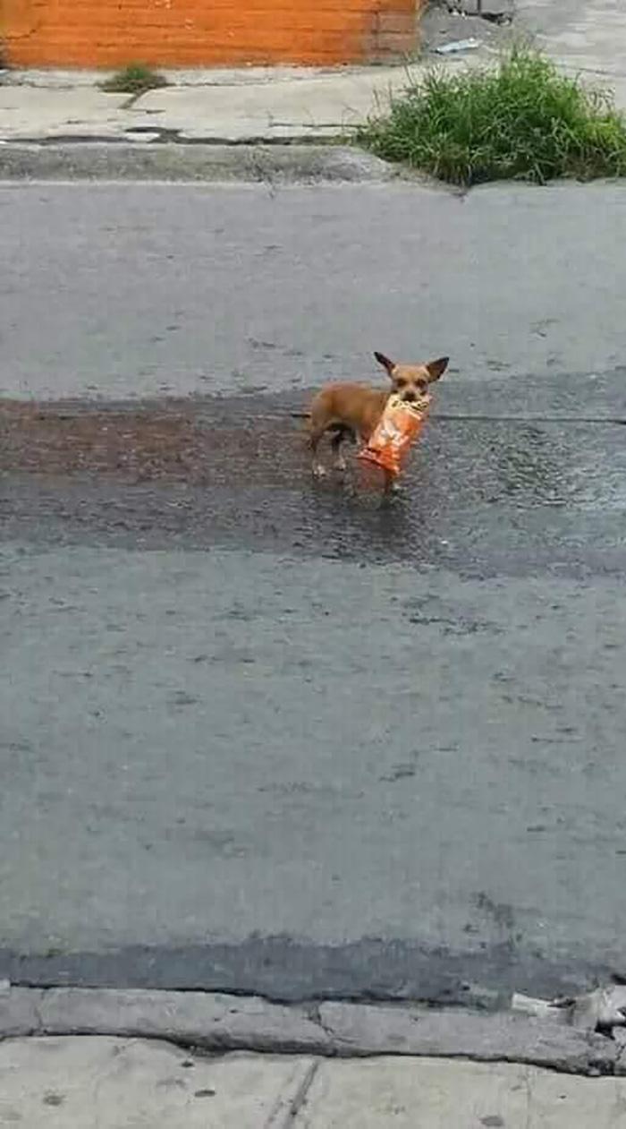 Dog Carrying a Bag of Cheetos