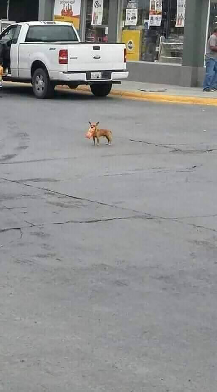 Dog on Street with a Bag of Cheetos in Its Mouth