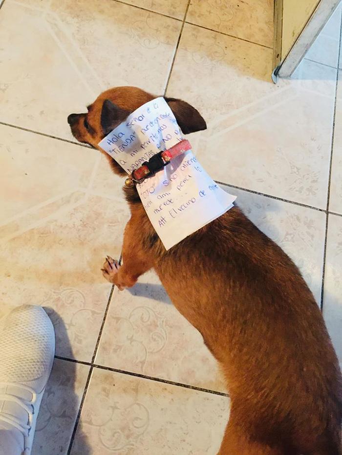 Antonio Munoz's Dog Tasked to Buy a Bag of Cheetos