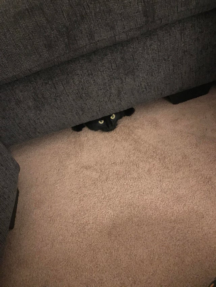 Black Cat Peeking Out of the Couch Pet Adoption Photo