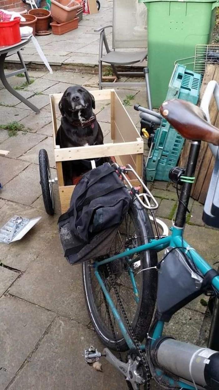Black Dog in Trailer Pet Adoption Photo
