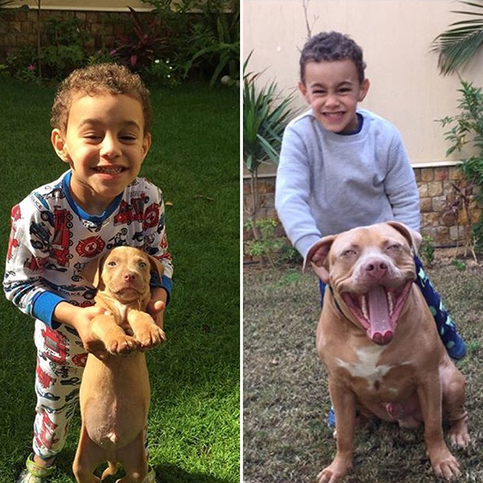 Boy and Dog Growing Up Together