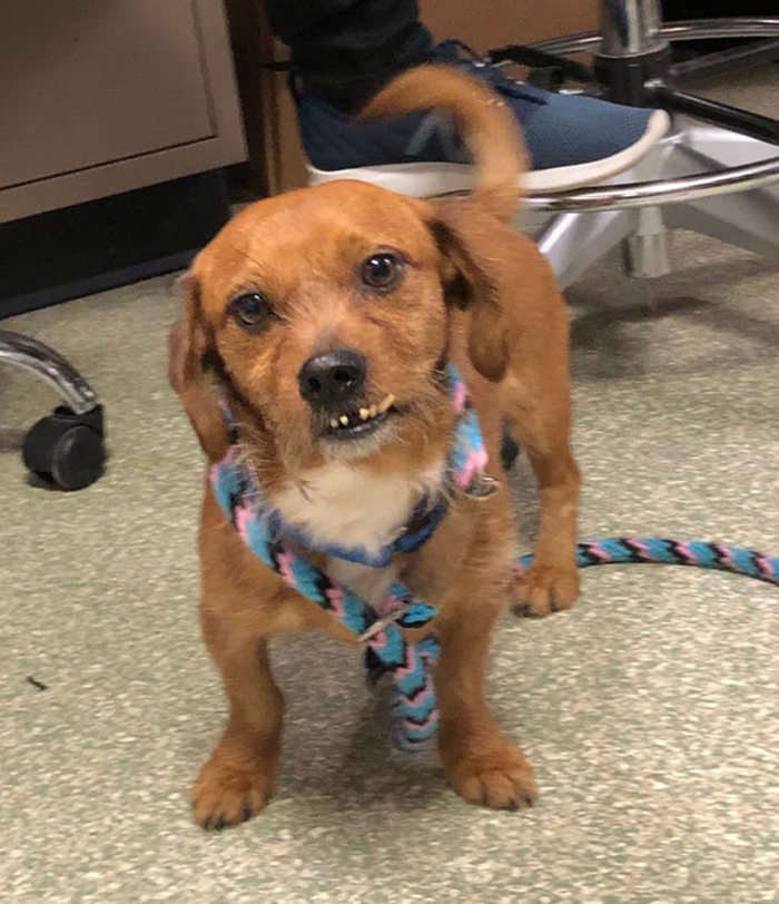 Brown Dog Pet Adoption Photo
