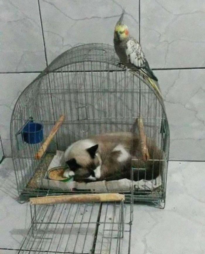 Cat Sleeping Inside a Bird's Cage