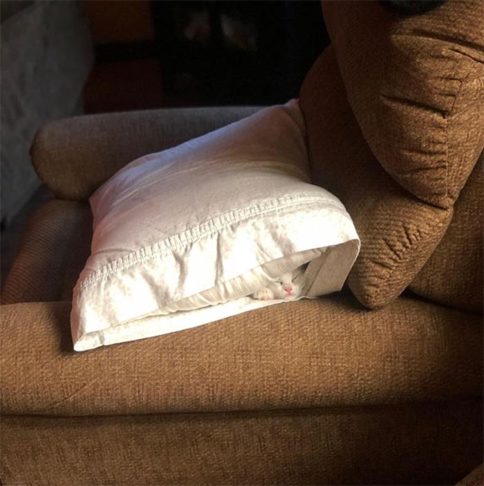 Cat Sleeping Underneath a Pillow Inside a Pillowcase