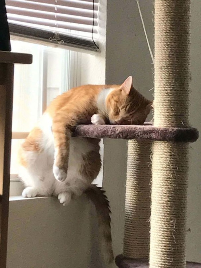 Cat Sleeping on Its Scratching Post