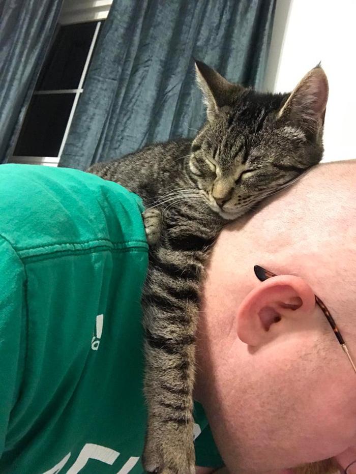 Cat Sleeping on Owner's Nape