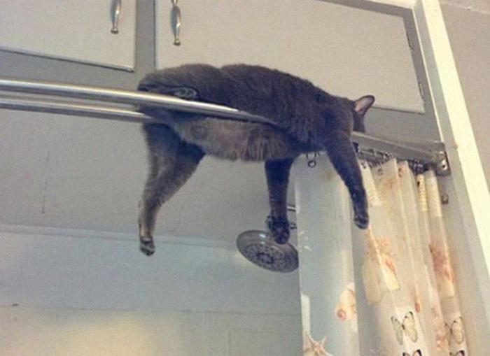 Cat Sleeping on a Shower Curtain Rod