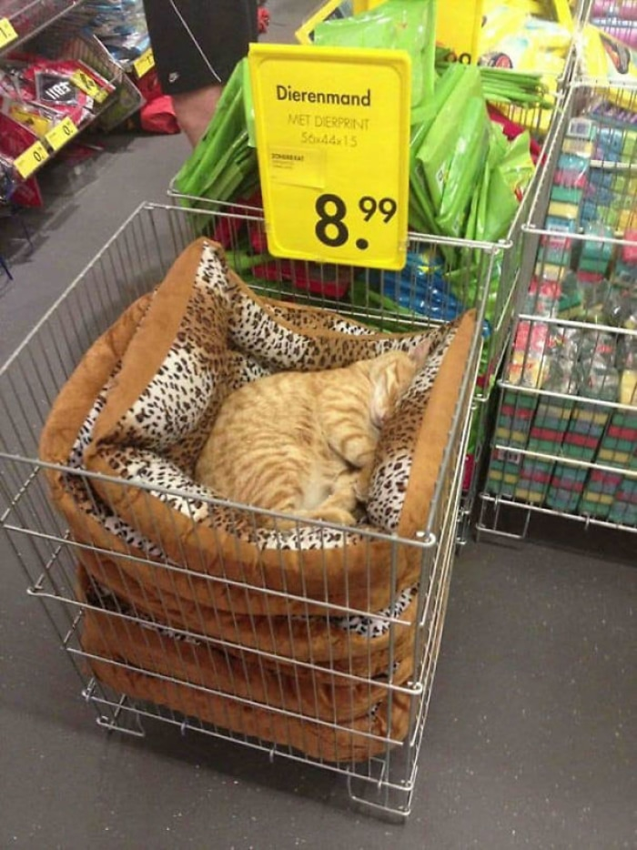 Cat Sleeping on a Stack of Pillows with Leopard Print