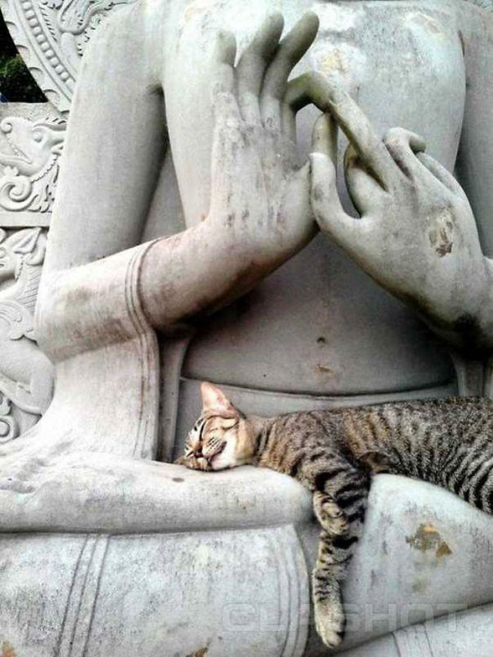 Cat Sleeping on a Statue