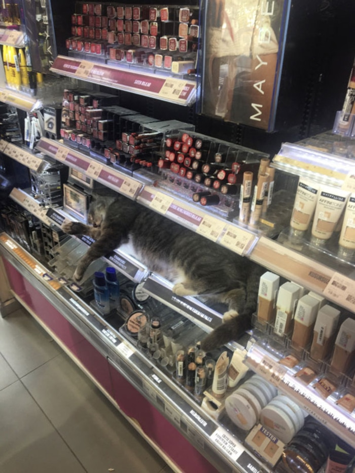 Cat Sleeping on a Store's Makeup Section
