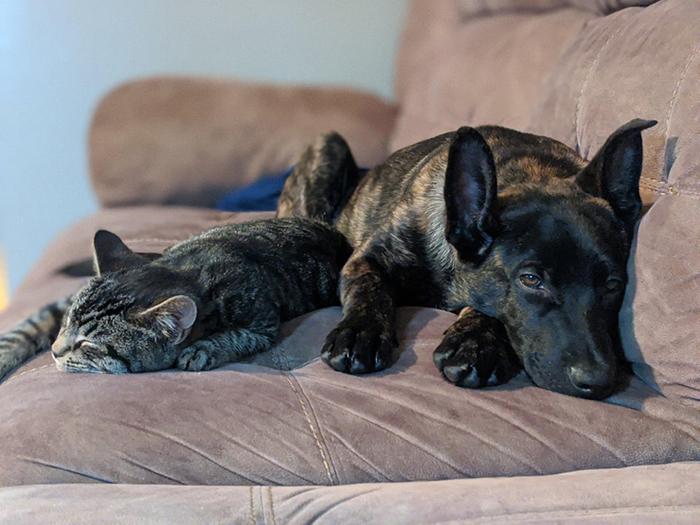 Cat and Dog Pet Adoption Photo