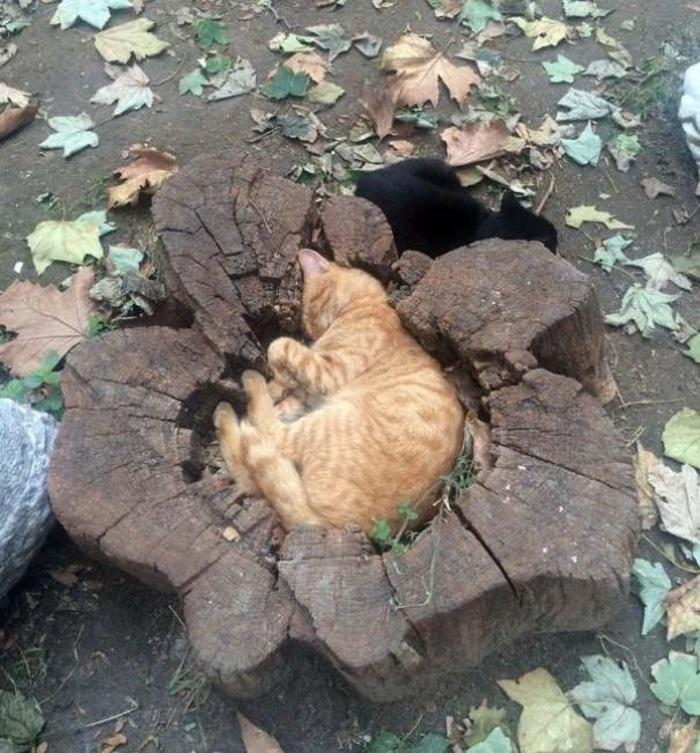 Cats Sleeping Inside a Log