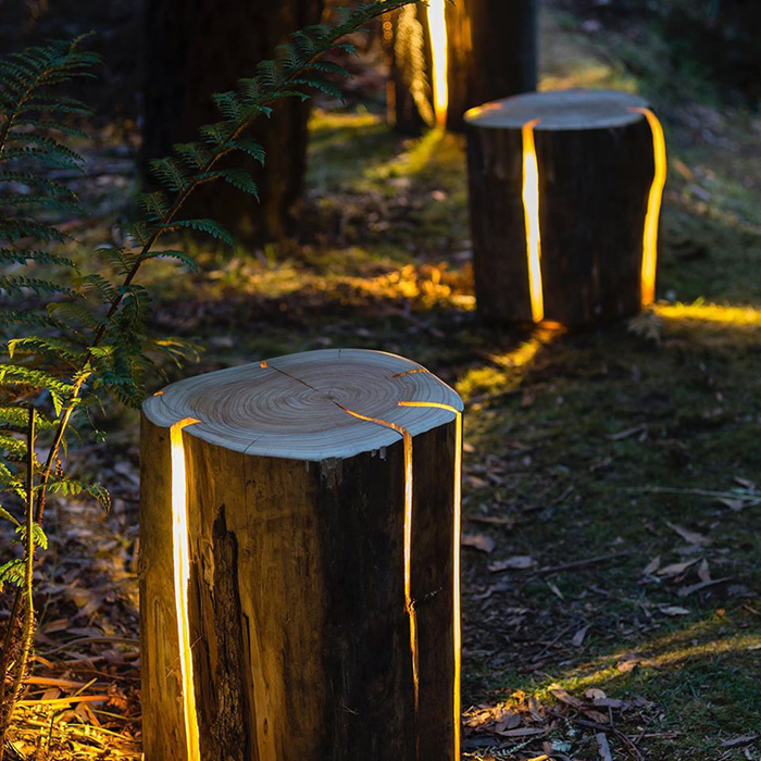 Cracked Log Lamps in the Forest
