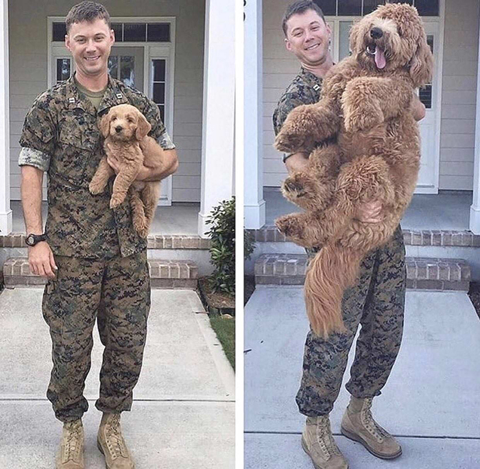 Dog Growing Up Before and After Owner's Military Enlistment